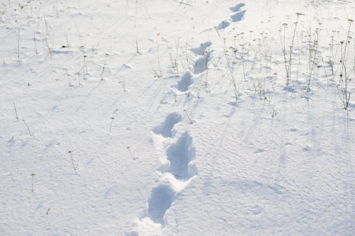 depositphotos_40455231-stock-photo-footprints-in-the-snow.jpg